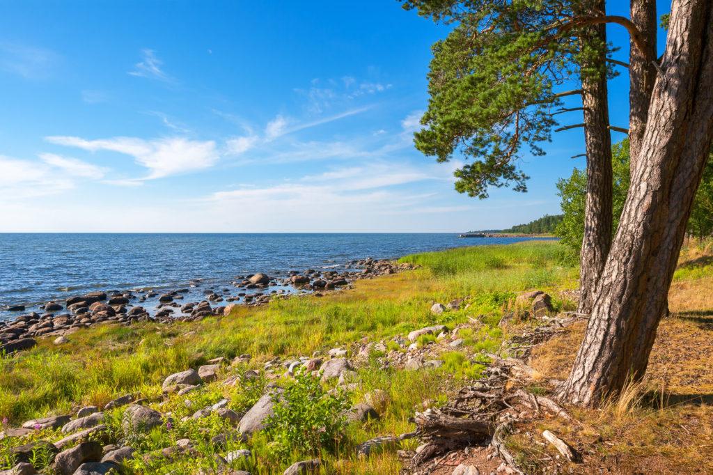 Ein felsiger Strand bei Loksa, das Meer links, rechts stehen 3 Bäume im Vordergrund.